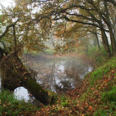Zamglony zbiornik wodny w lesie