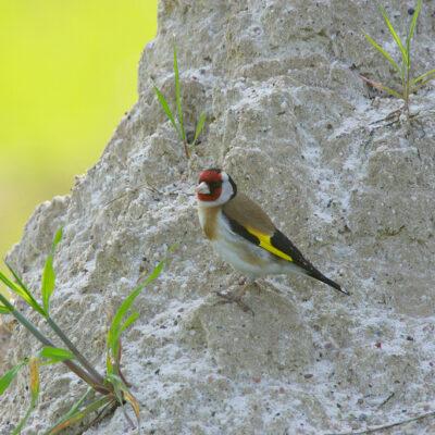 Ptak siedzący na skale