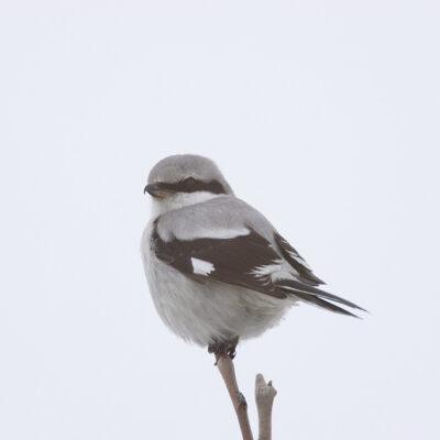 Ptak siedzący na gałęzi