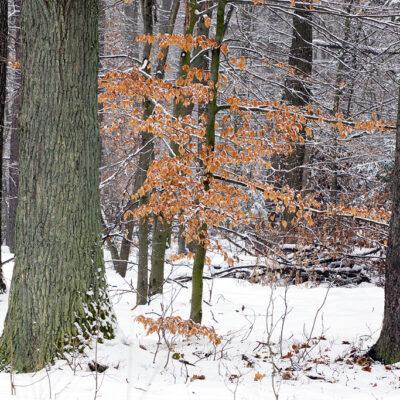 Las i drzewa pokryte śniegiem