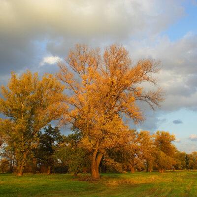 Krajobraz z drzewami popołudniową porą