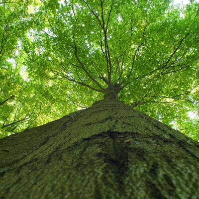 Zdjecie drzewa z perspektywy ziemii