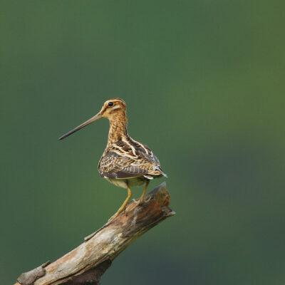 Ptak siedzący na pniu drzewa