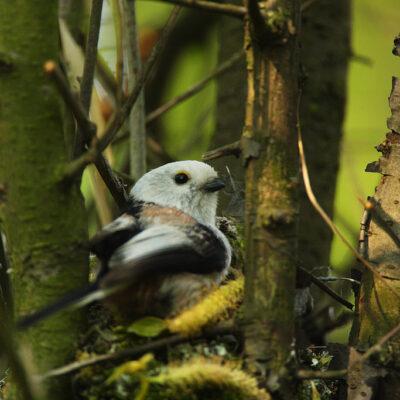 Ptak siedzący w gnieździe na drzewie