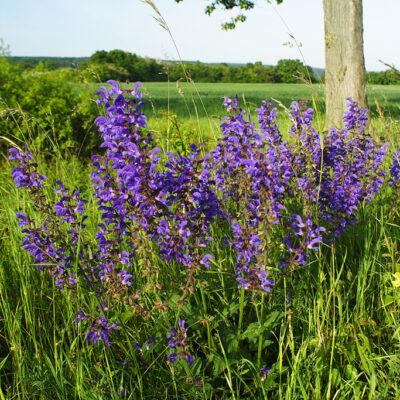 Chroniona roślinność i kwiaty