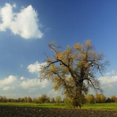 Widok na jesienne pole i drzewo