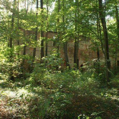 Las w Starej Rudnej