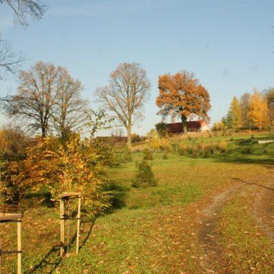 Las jesienią w Starej Rudnej