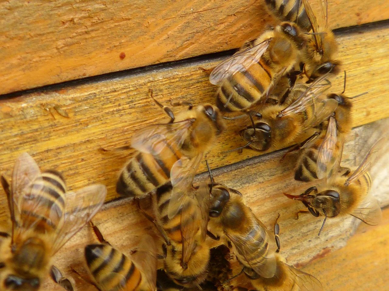 Pszczoły na ulu